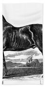 Prize Horse, 1857 Beach Towel