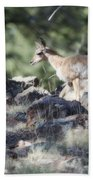Pronghorn Antelope Fawn Beach Towel