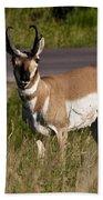 Pronghorn Male Custer State Park Black Hills South Dakota -2 Beach Towel