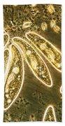 Protozoa, Paramecium, Lm Beach Towel