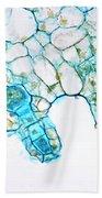 Pteridophyta Ferns Beach Towel