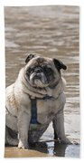Pug Can't Be Budged Beach Towel