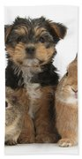 Pup, Guinea Pig And Rabbit Beach Towel