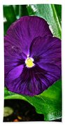 Pure Purple Beach Towel
