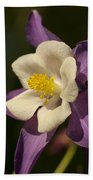 Purple And White Columbine Blossom Facing The Sun - Aquilegia Beach Towel