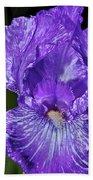 Purple And White Stiped Iris Beach Towel