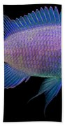 Purple Chromis Beach Towel