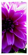 Purple Dahlia Beach Towel