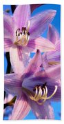 Purple Hosta Blooms Beach Towel