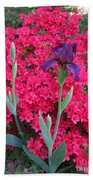 Purple Iris In Pink  Beach Towel