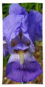 Purple Iris Beach Towel