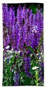 Purple Lavender Flower In Bloom  Beach Towel