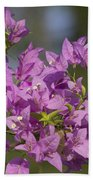 Purple Of The Bougainvillea Blossoms Beach Towel