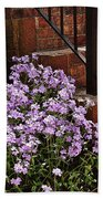 Purple Phlox  Beach Towel