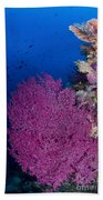 Purple Sea Fan In Raja Ampat, Indonesia Beach Towel