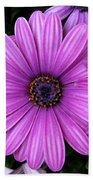 Purple Trio Beach Sheet