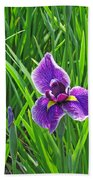 Purple Water Iris Beach Towel