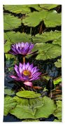 Purple Water Lilies - Nymphaea Capensis  Beach Towel