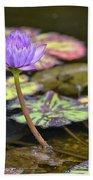 Purple Water Lilly Beach Towel