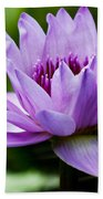 Purple Petals Water Lily Beach Towel