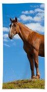 Quarter Horse Beach Sheet