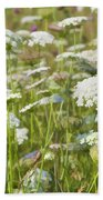 Queen Anne's Lace In All Its Glory Beach Towel