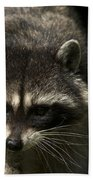 Raccoon 2 Beach Towel