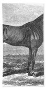Racehorse, 1867 Beach Towel
