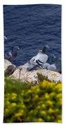 Racing Pigeons Beach Towel
