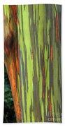 Rainbow Gum Tree Hawaii Beach Towel