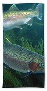 Rainbow Trout Oncorhynchus Mykiss Pair Beach Towel