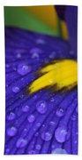 Raindrops Purple Dutch Iris Flower Beach Towel