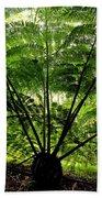Rainforest Backlight Beach Towel