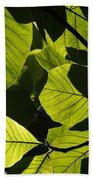 Rainforest Leaves Showing Sunlight Beach Towel