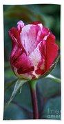 Raspberry Swirl Rose Beach Towel