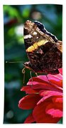 Red Admiral Probocis Beach Towel