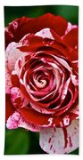 Red And White Rose Beach Towel