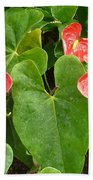 Red Anthurium Beach Towel