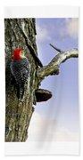 Red-bellied Woodpecker - Male Beach Towel