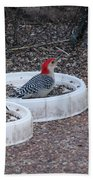Red Bellied Woodpeckers Male And Female Beach Towel