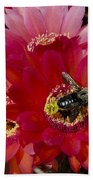 Red Cactus Flower With Bumble Bee Beach Towel