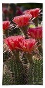 Red Cactus Flowers Beach Towel