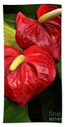 Red Calla Lily Beach Towel