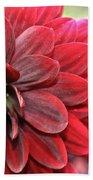 Red Carpet Dahlia Beach Towel