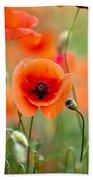 Red Corn Poppy Flowers 05 Beach Towel by Nailia Schwarz