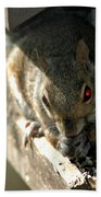 Red Eyed Demon Squirrel Beach Towel