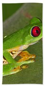 Red-eyed Leaf Frog Beach Towel by Tony Beck