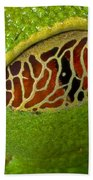 Red Eyed Tree Frog Eyelid Costa Rica Beach Towel