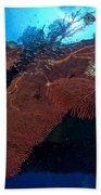 Red Fan Cora With Sunburst, Papua New Beach Sheet