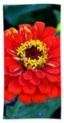 Red Flower  Beach Towel